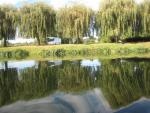 川にうつる柳の木