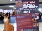 イギリスのアルパカ・ショー