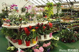 Neal's Nurseries Garden Centre